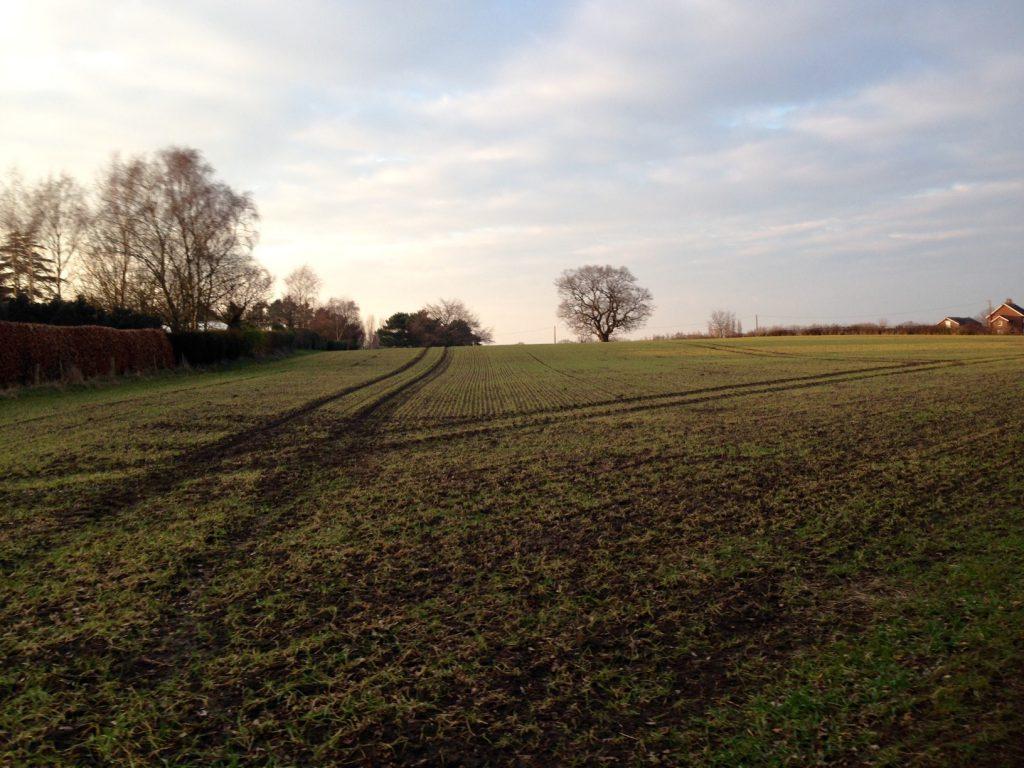 Rheads Meadow