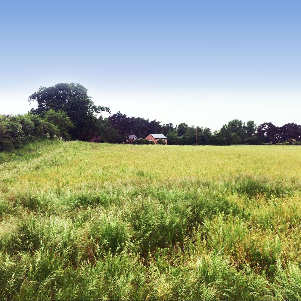 Rheads Meadow Northern Field