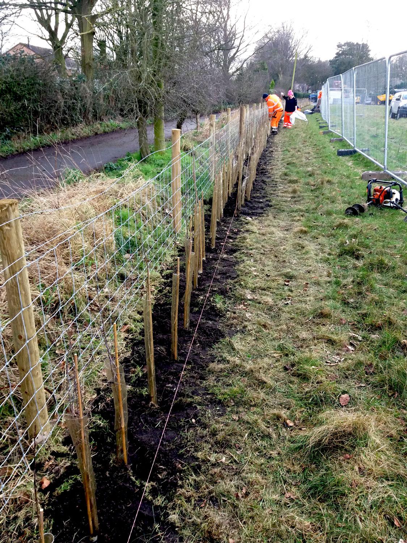 Sibelco hedge planting