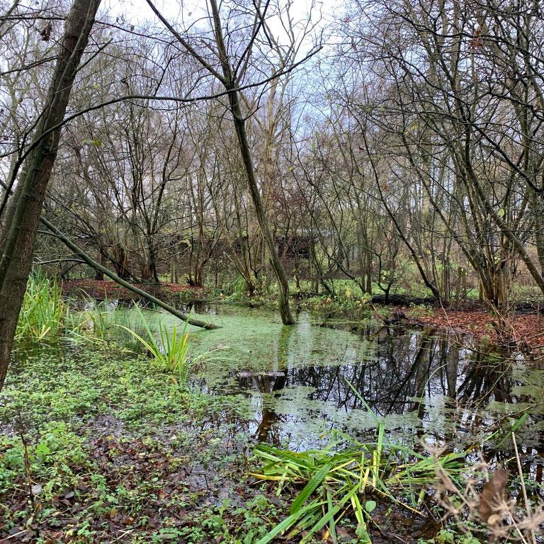 Blackfirs Nature Reserve