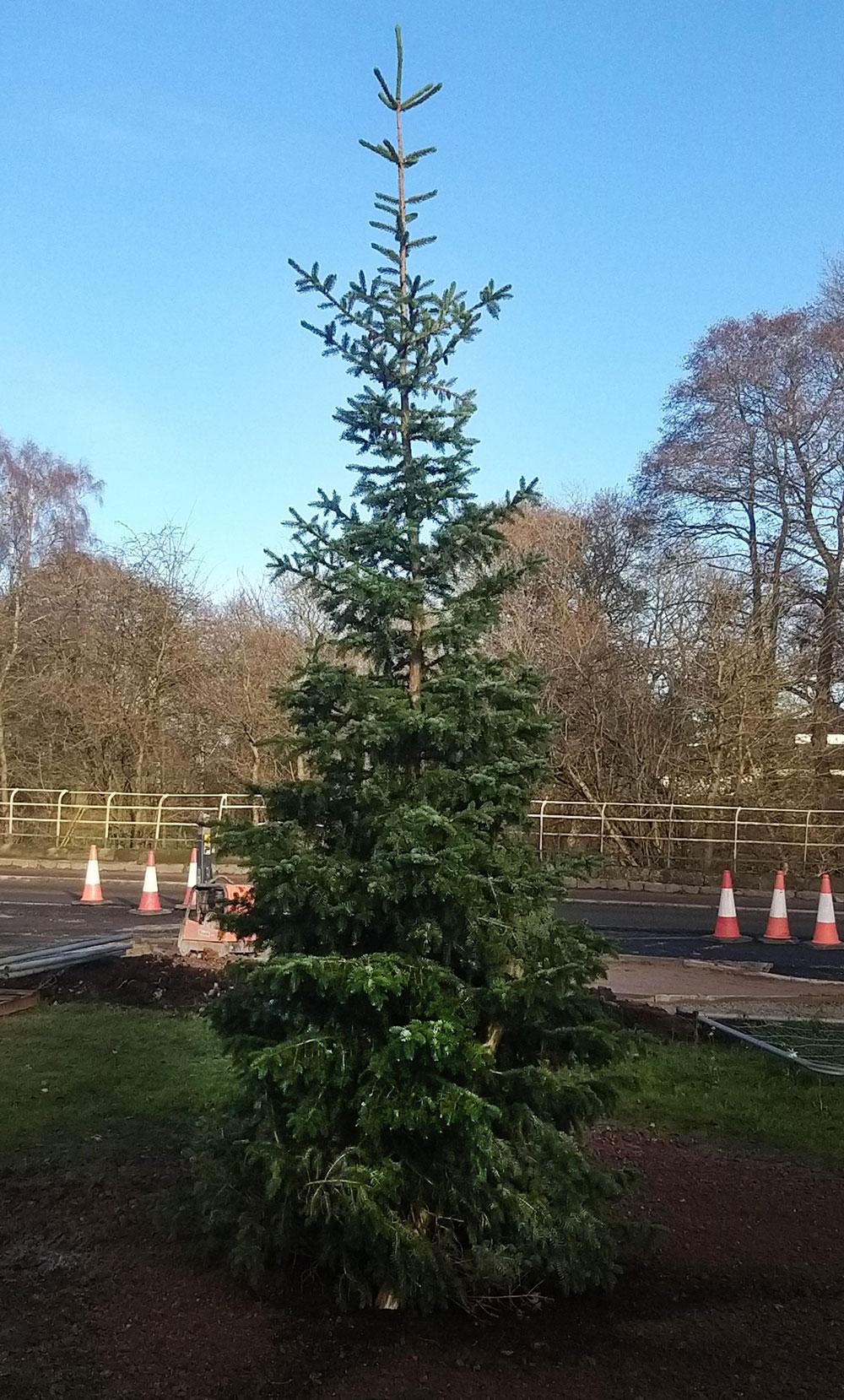 Somerford Christmas Tree