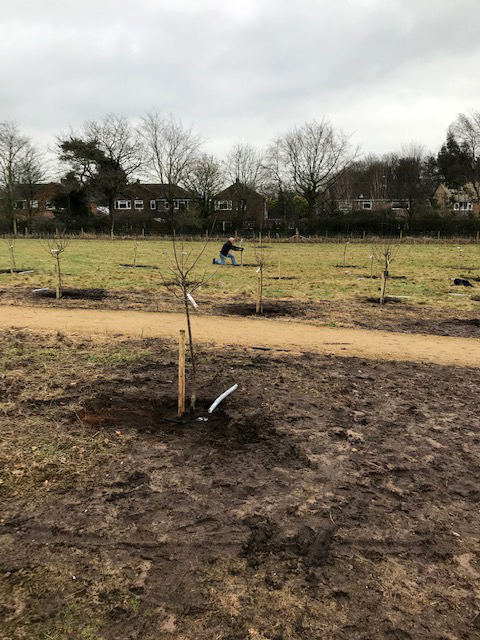 Orchard Planting by Cheshire Wildlife Trust